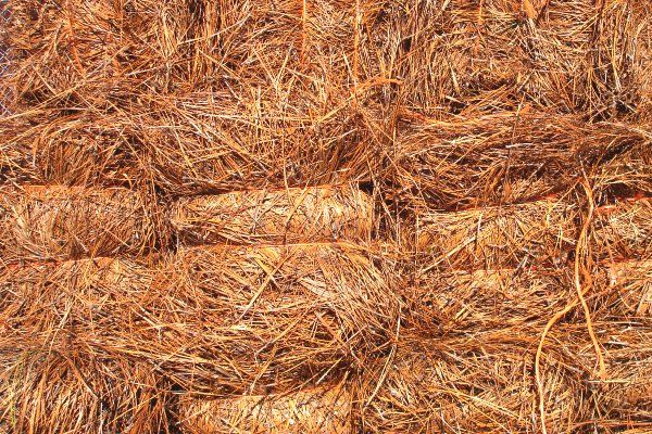 Pine straw and wheat straw for landscaping